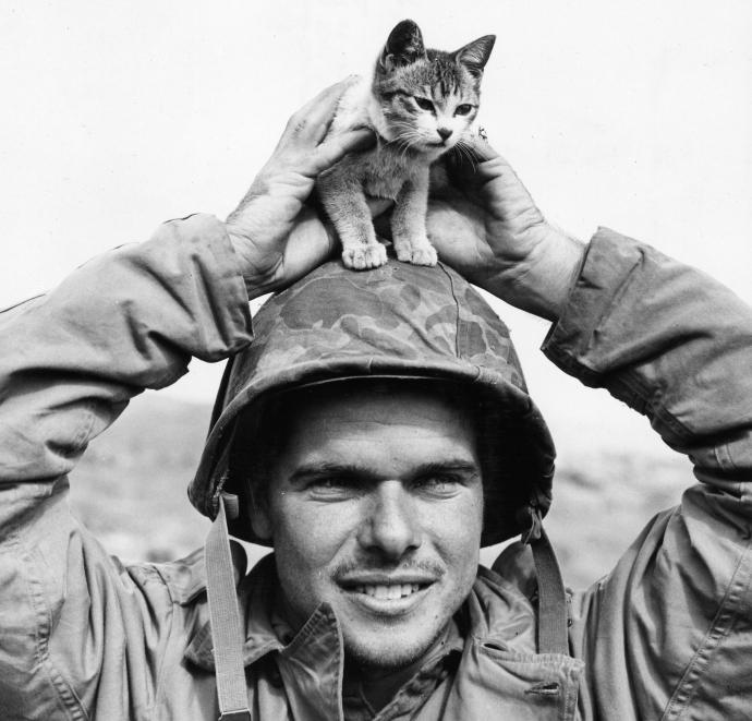 Marine with Surabachi Sue Animal Series Kitten Iwo Jima 02--45 (1 of 1)